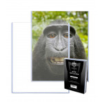 6x9 Photo Toploaders Holders - Case of 250